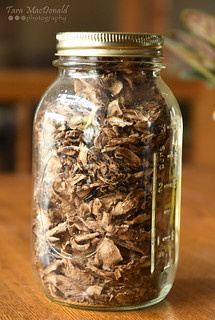 Dried Burdock Root | by Tara MacDonald - www.TheVillagePlate.com