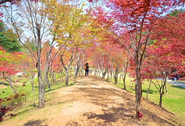 nami island Baekpungmilwon Maple Garden