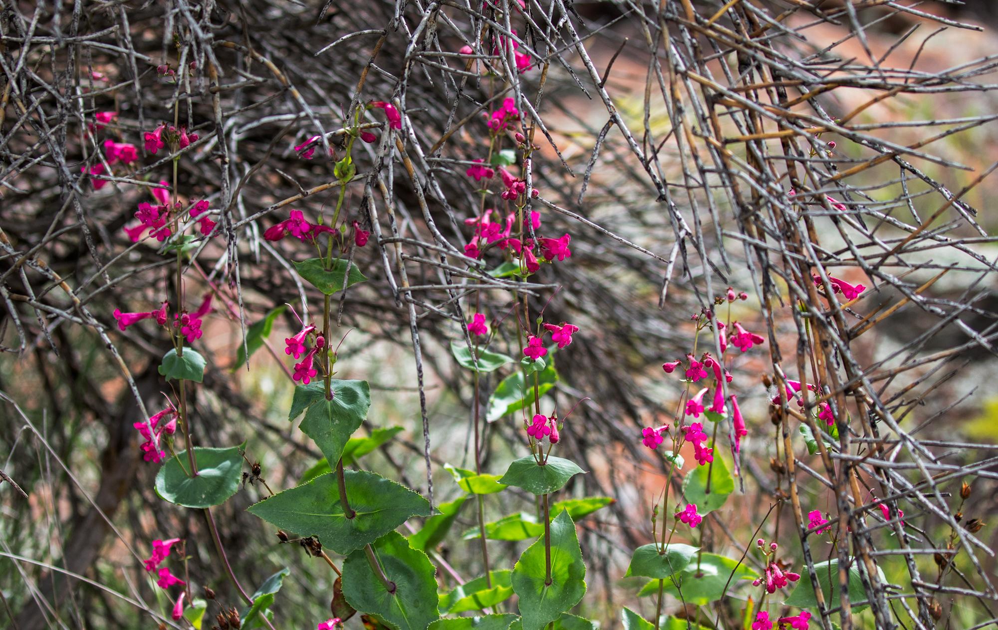 A-Flower-134-7D2-041017