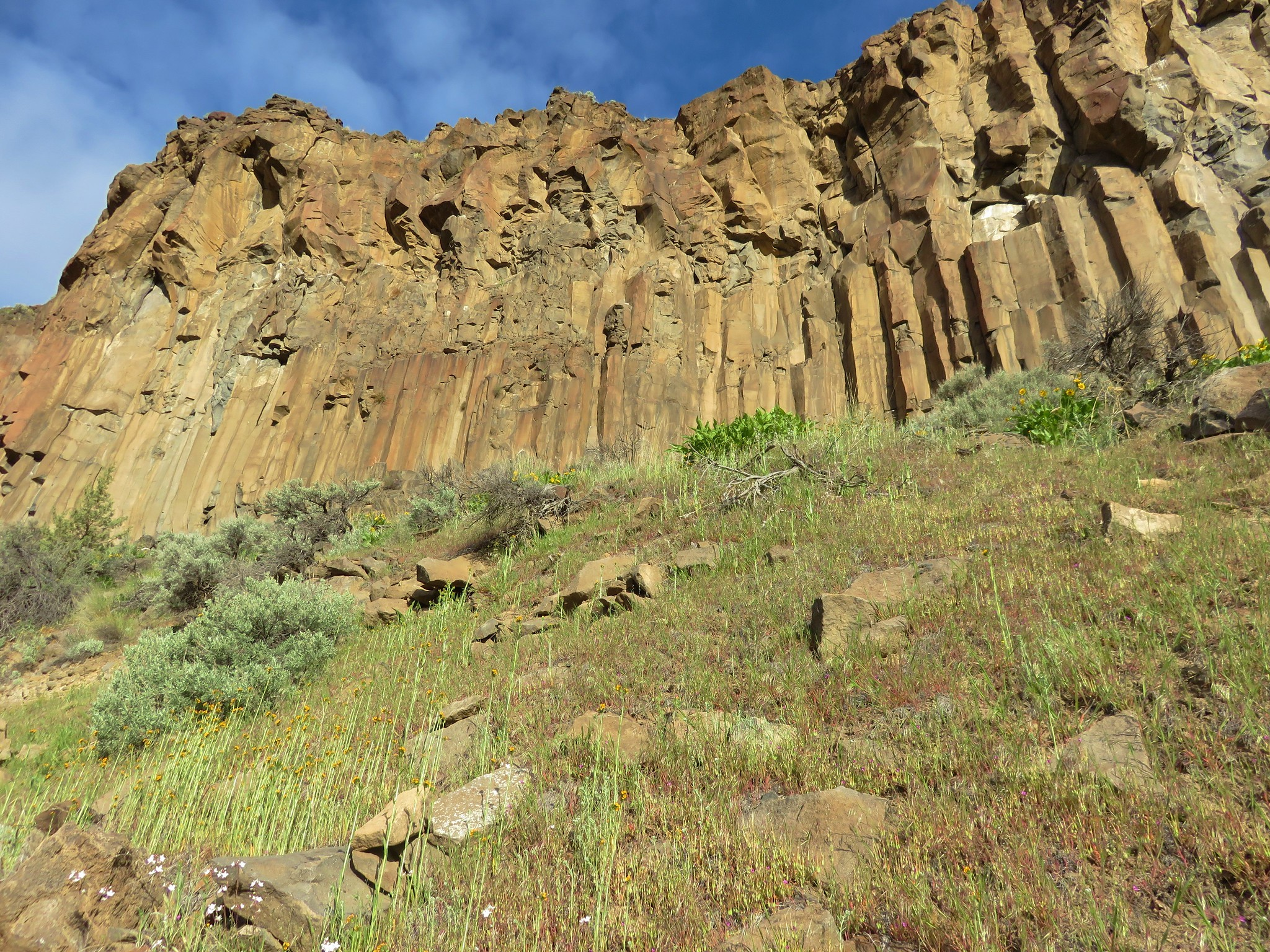 Wildflowers below columnar basalt