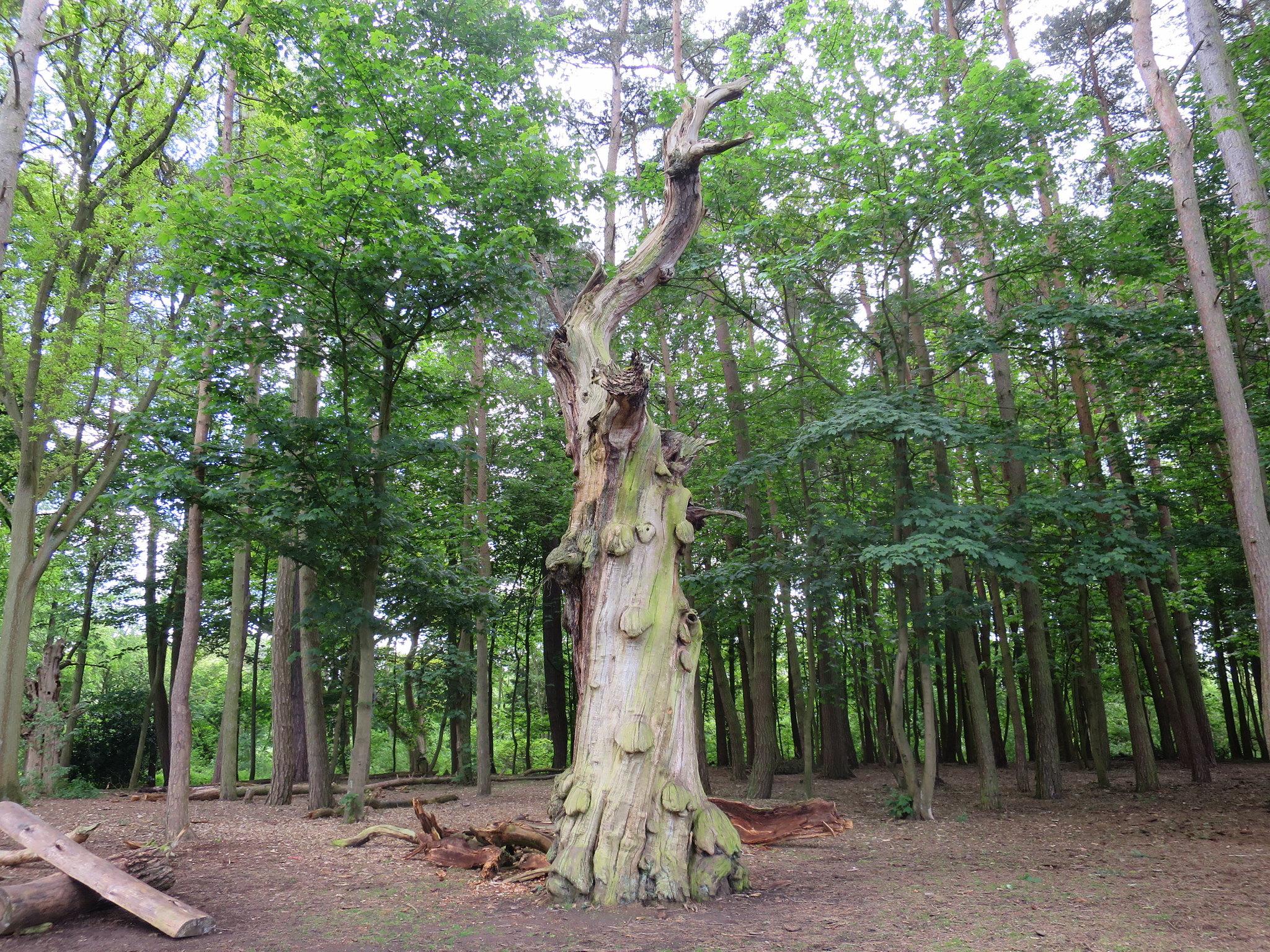 Coombe Country Park, Hello Im Clo, Culture Blogger 28