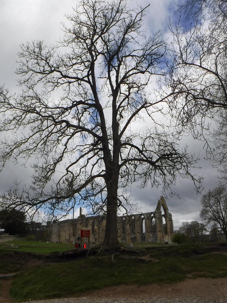 Bolton Abbey Priory 17