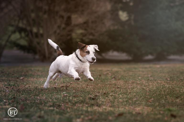 koirakuvaus-kuopio-lemmikkikuvaus-bellaphoto-3