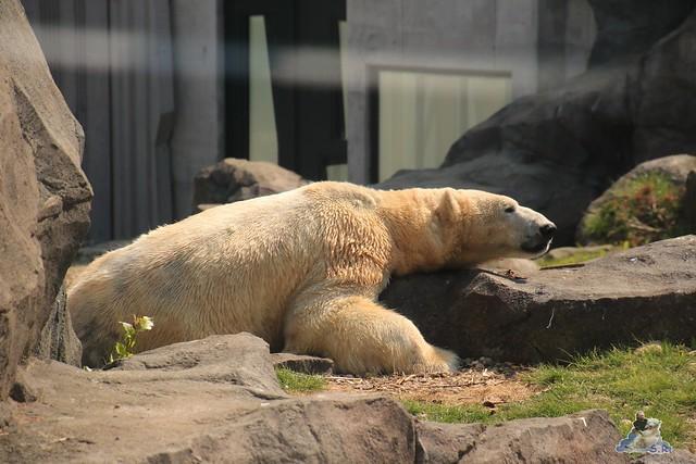 Tierpark Schönbrunn 29.04.2017 131