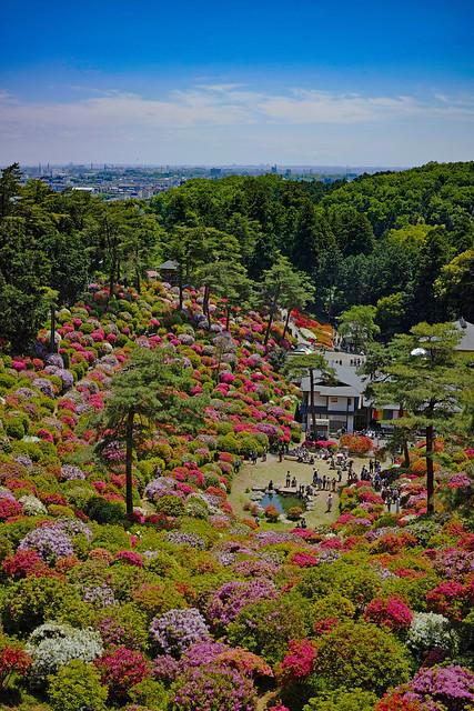 Shiofune Kannon temple Azalea Festival 2017 39