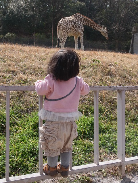 The giraffe and My daughter (and Me...?) (GXR A16 24-85mm)