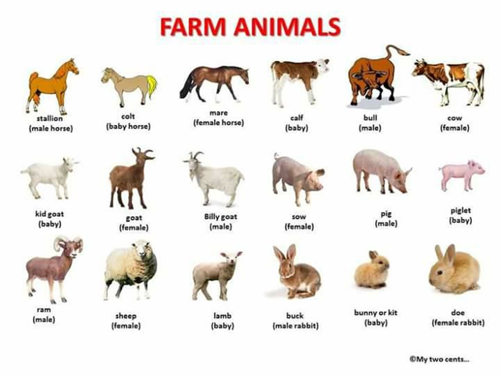 related pictures farm animals - photo #3