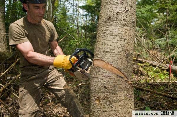 beskæring-af-træ