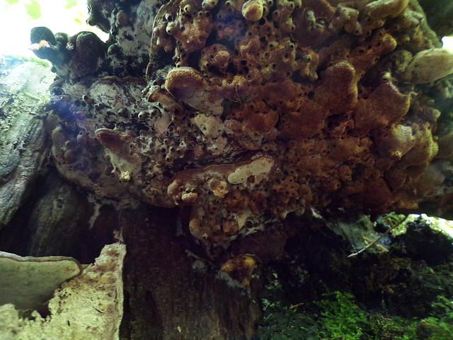 Eilenriede: Fungus on a tree stump