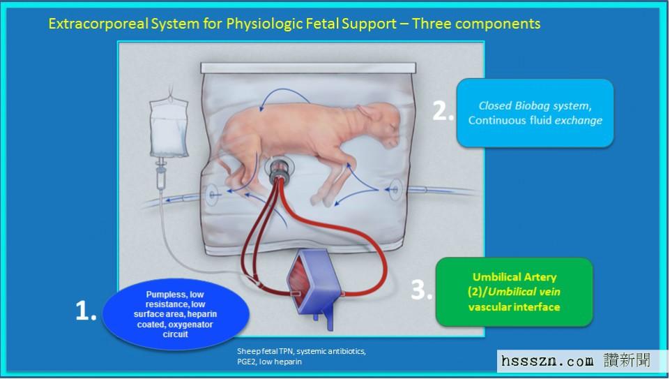 lamb-artificial-womb