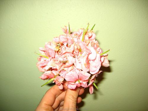 geranium_seed_pods