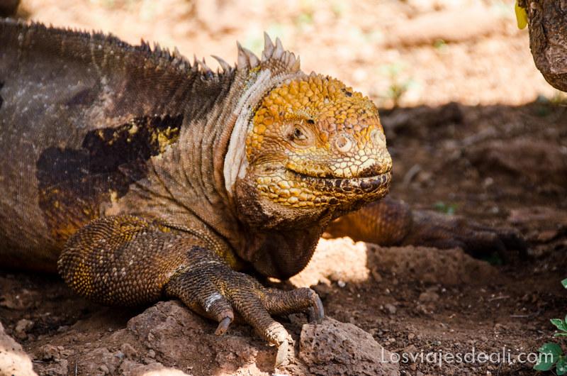 Isla Seymour viajar a Galápagos por tu cuenta