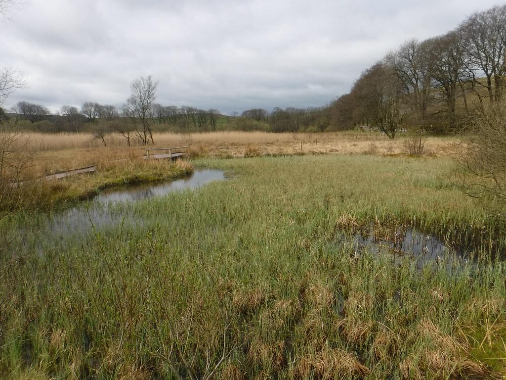 Tarn Moss 6