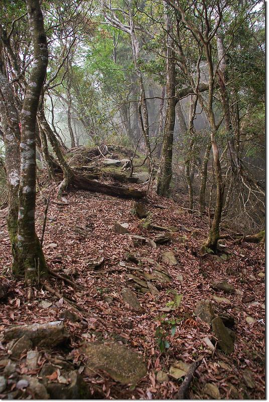 西大武山~1899峰稜線 (1)