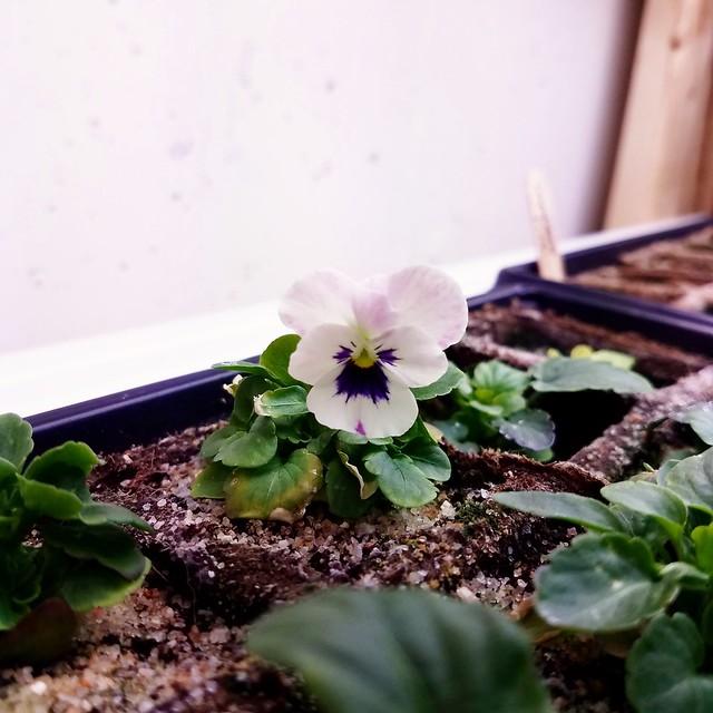Tiny viola!