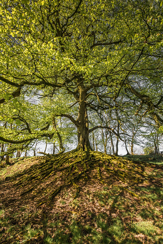 Roots (Spring) | by Alistair-Hamilton