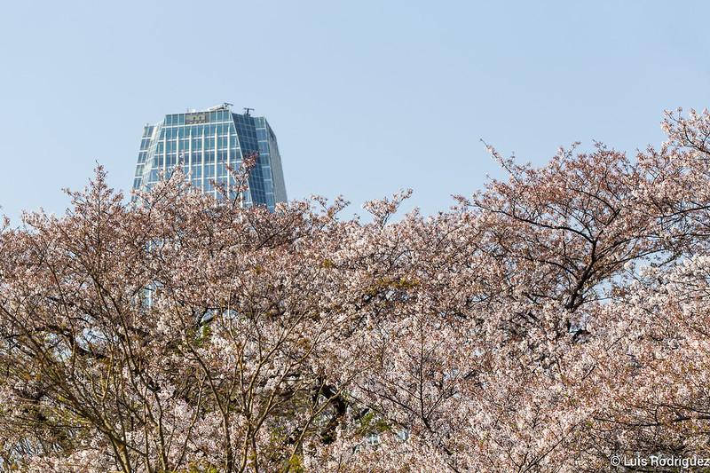 Zojiji-Shiba-Park-64