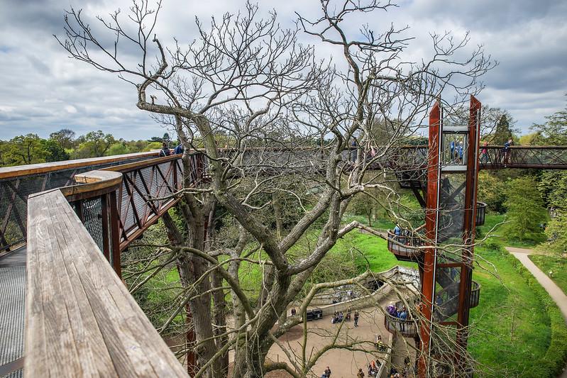 Tree top path