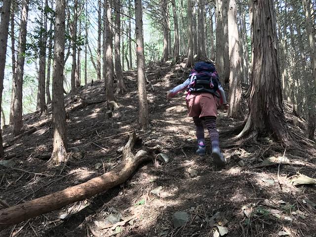 野登山 ミツマタの森 尾根 急登
