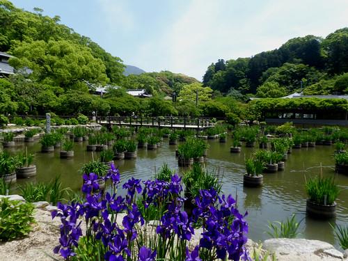 jp-fuk-region-dazaifu-temple Tenmangu (12)