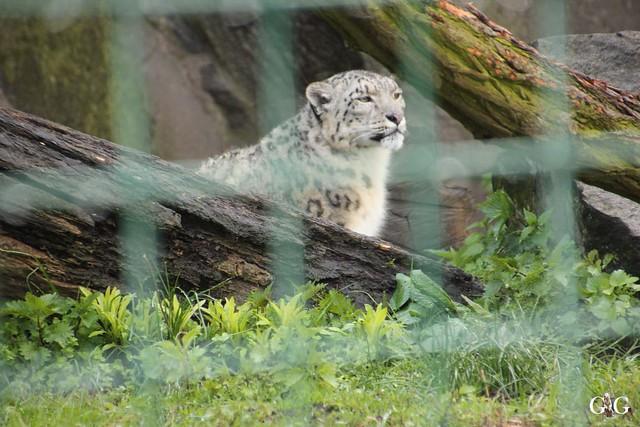 Besuch Tierpark Friedrichsfelde 17.04.1717