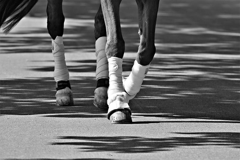 Horse 23.04 (3)