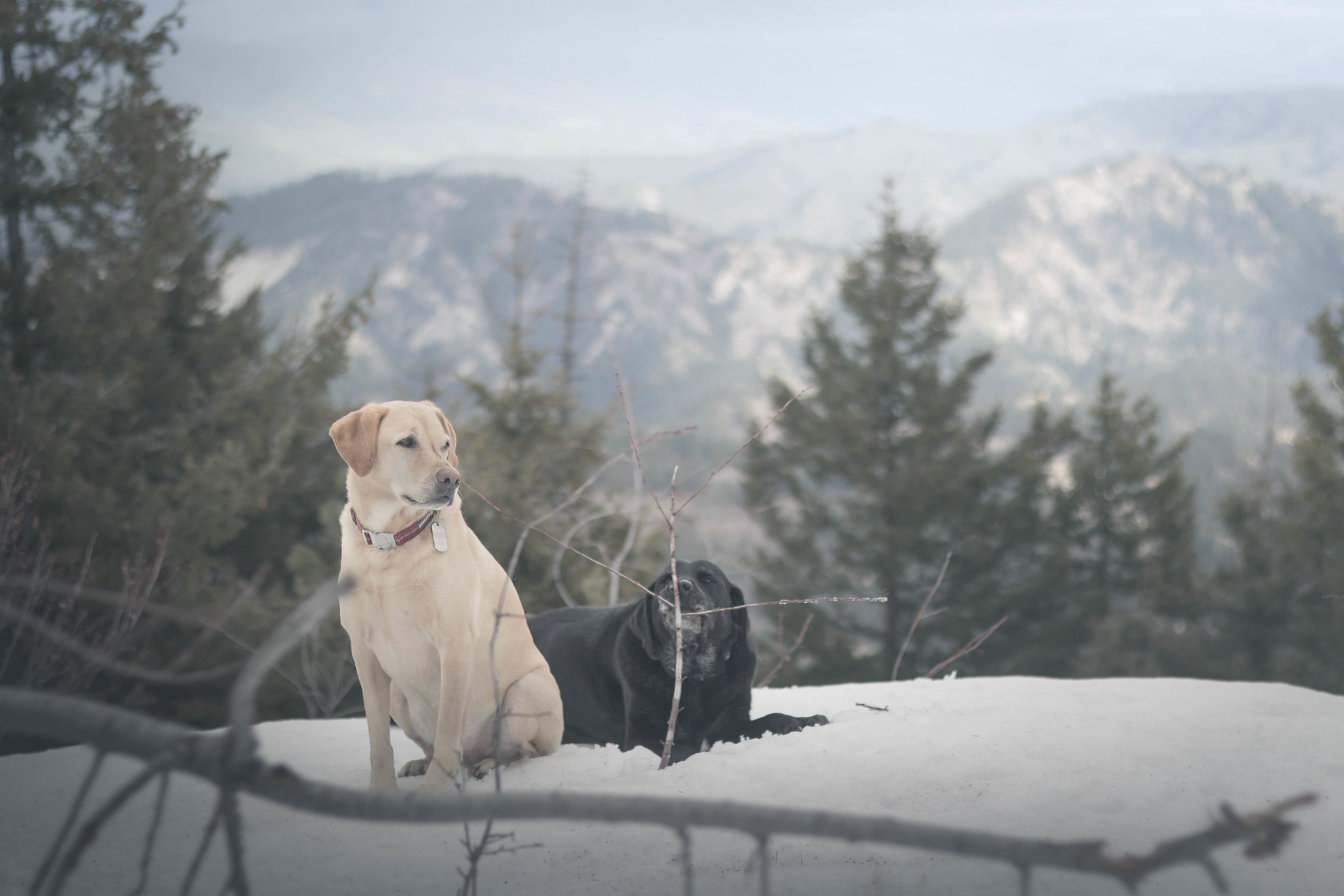 Summit dogs on Tiptop