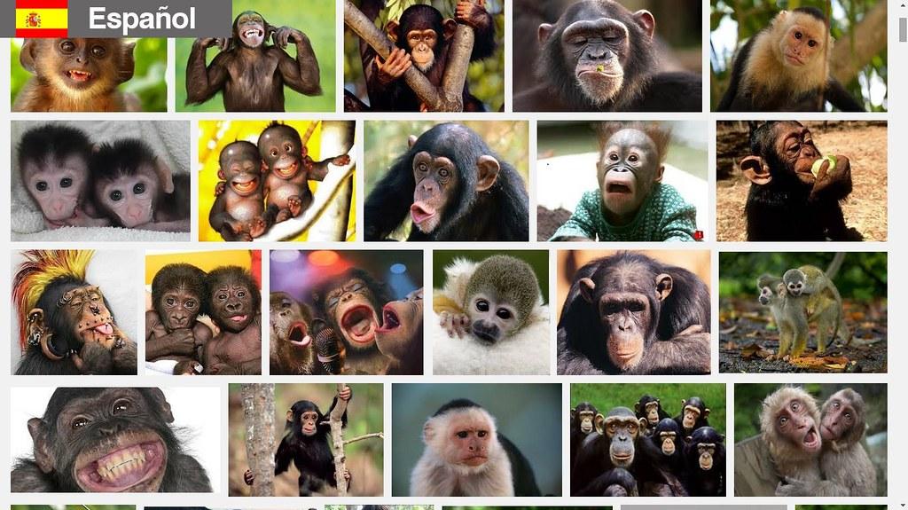 Búsqueda de monos en español