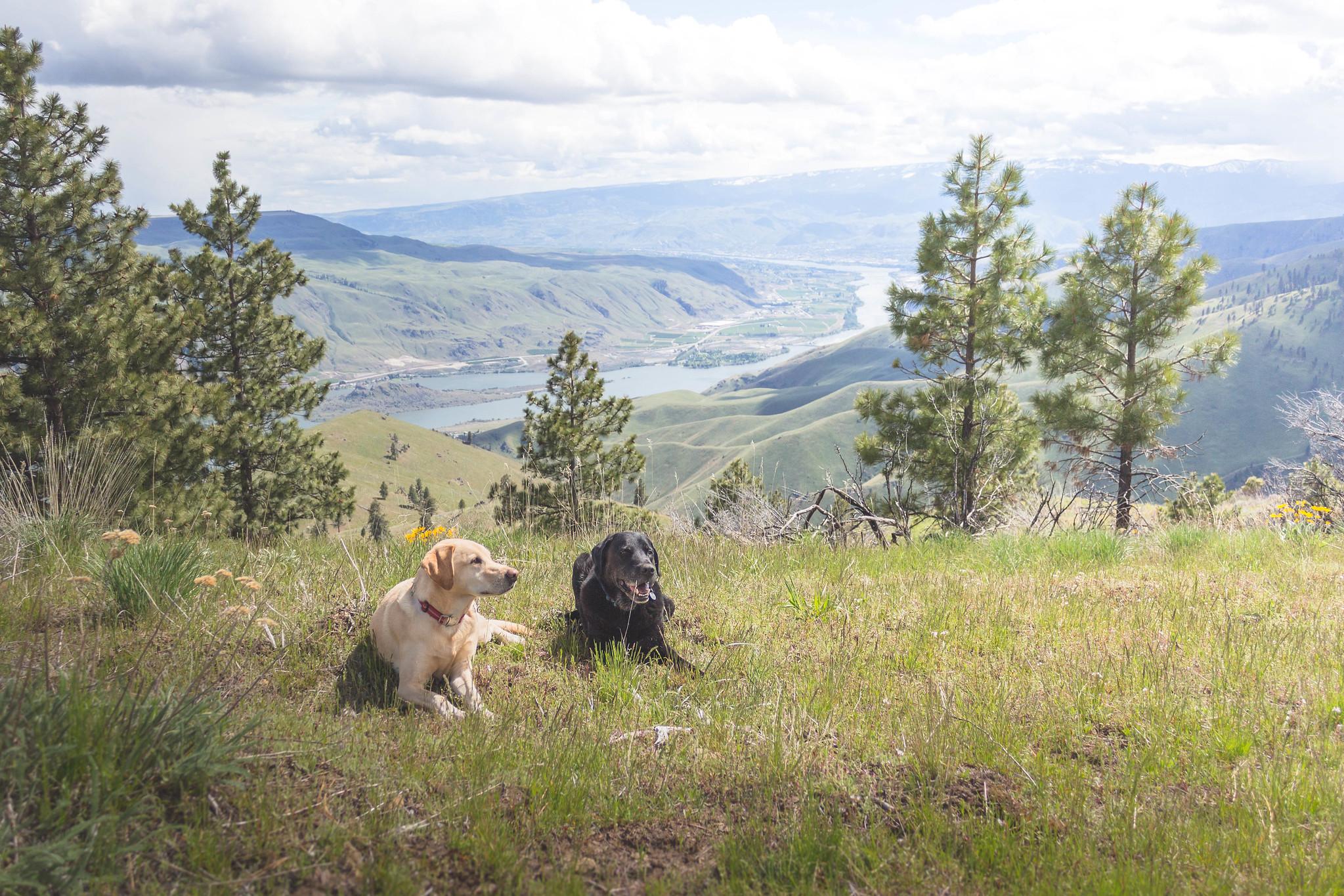 Desert dogs on Spencer Peak