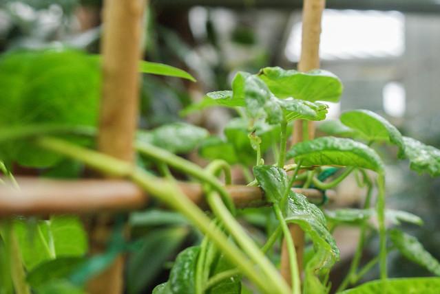 kasvitieteellinen puutarha9