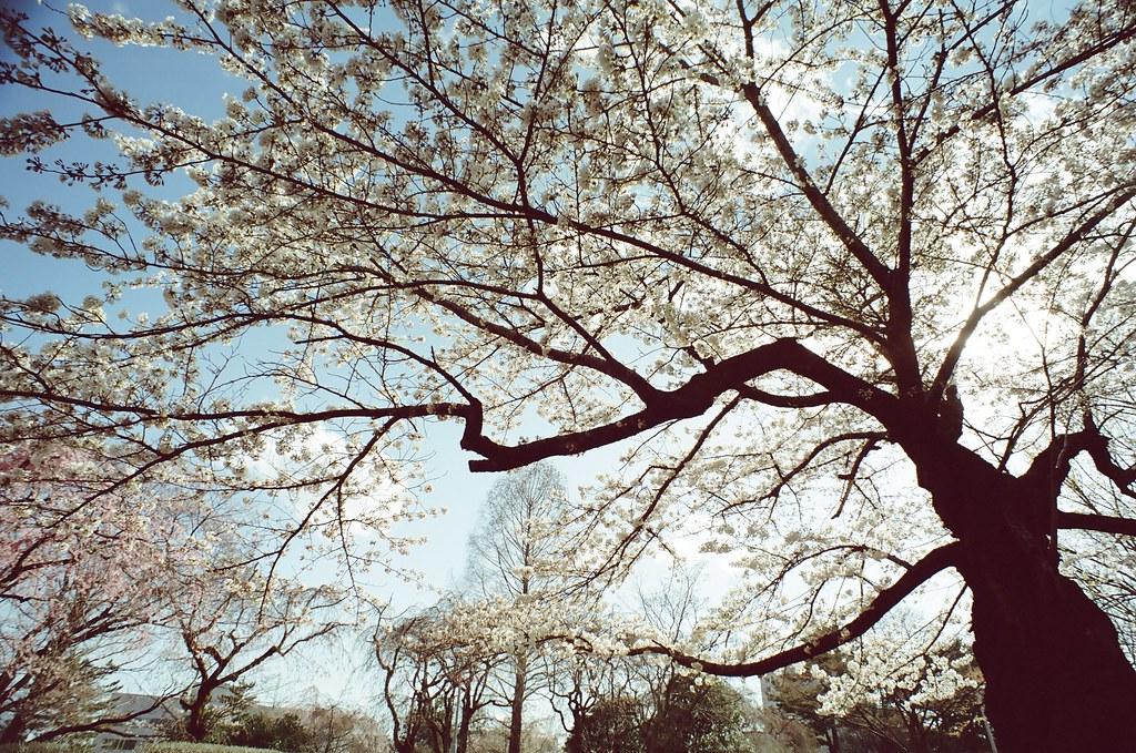 四月日本東北小旅行