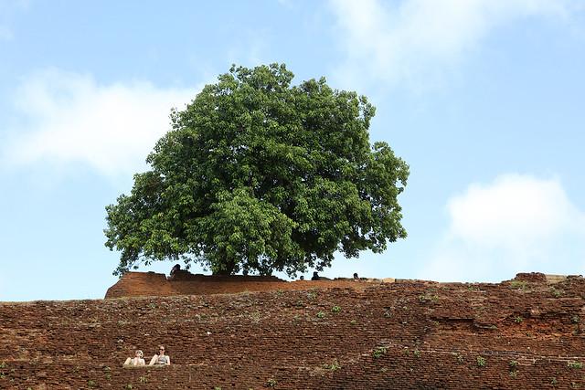 PW-Ceylon-Sigiriya9