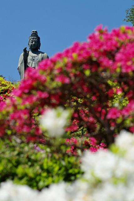 Shiofune Kannon temple Azalea Festival 2017 52