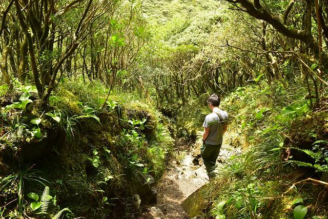 八丈富士・火口の森林地帯