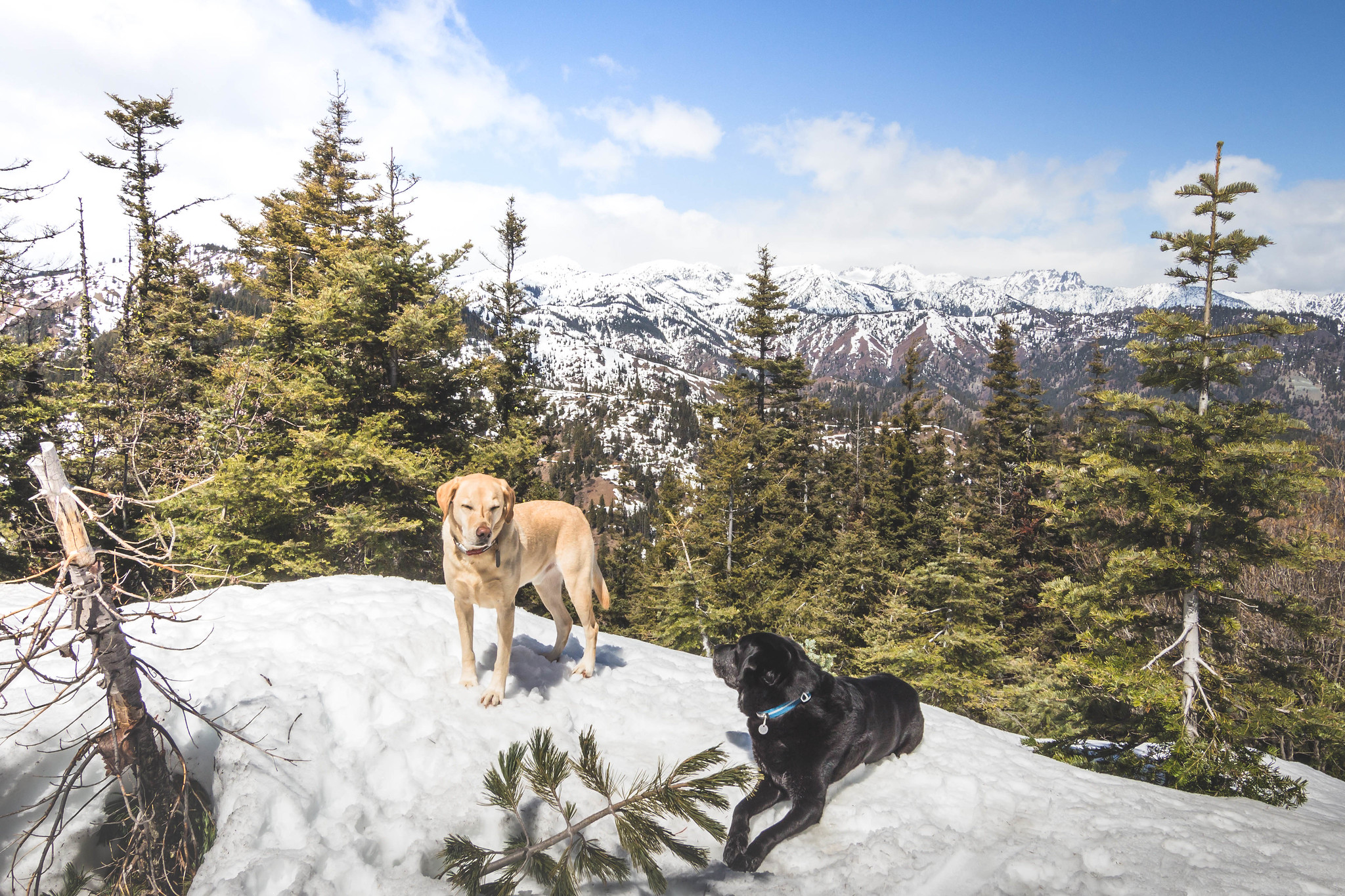 Summit dogs on Roughhouse Mountain