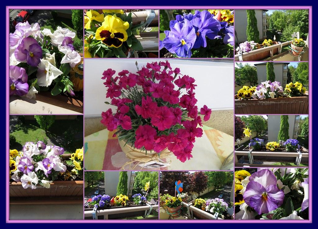 Fruhling Auf Meinem Balkon Ich Liebe Blumen Um Mi Flickr