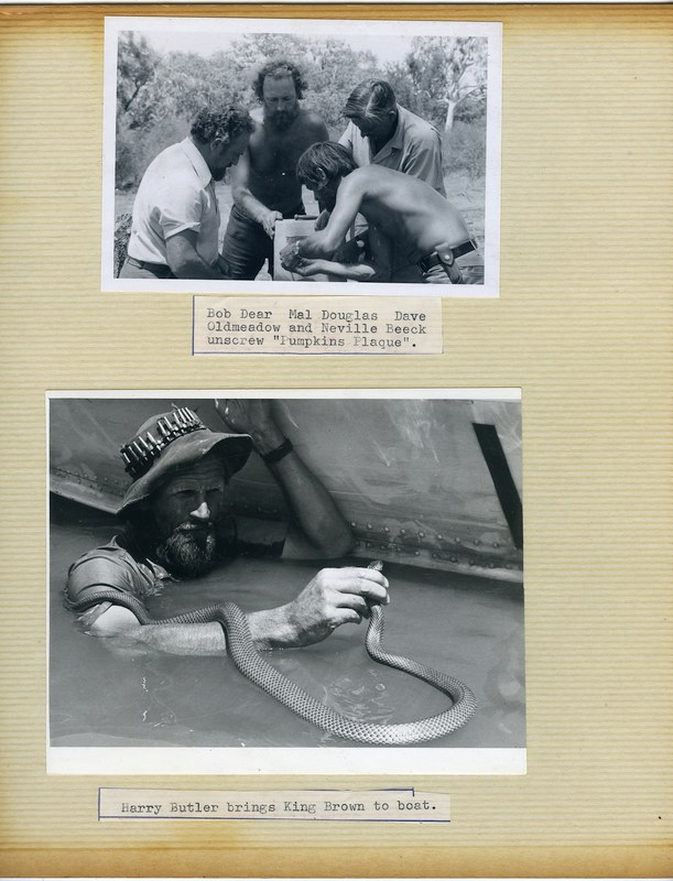 "Page from the Ord Noah Henry Hall Album has 2 x photographs - Above is Bob Dear, Malcolm Douglas< David Oldmeadow and Neville Beeck unscrew ""Pumpkins Plaque"". - Photograph below shows Harry Butler handling a King Brown snake in flood waters beside an aluminium dinghy."