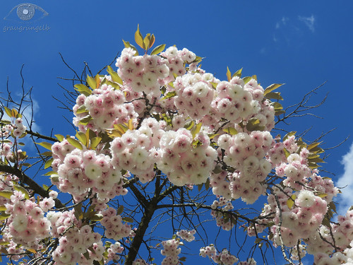 Frühling in der Großstadt