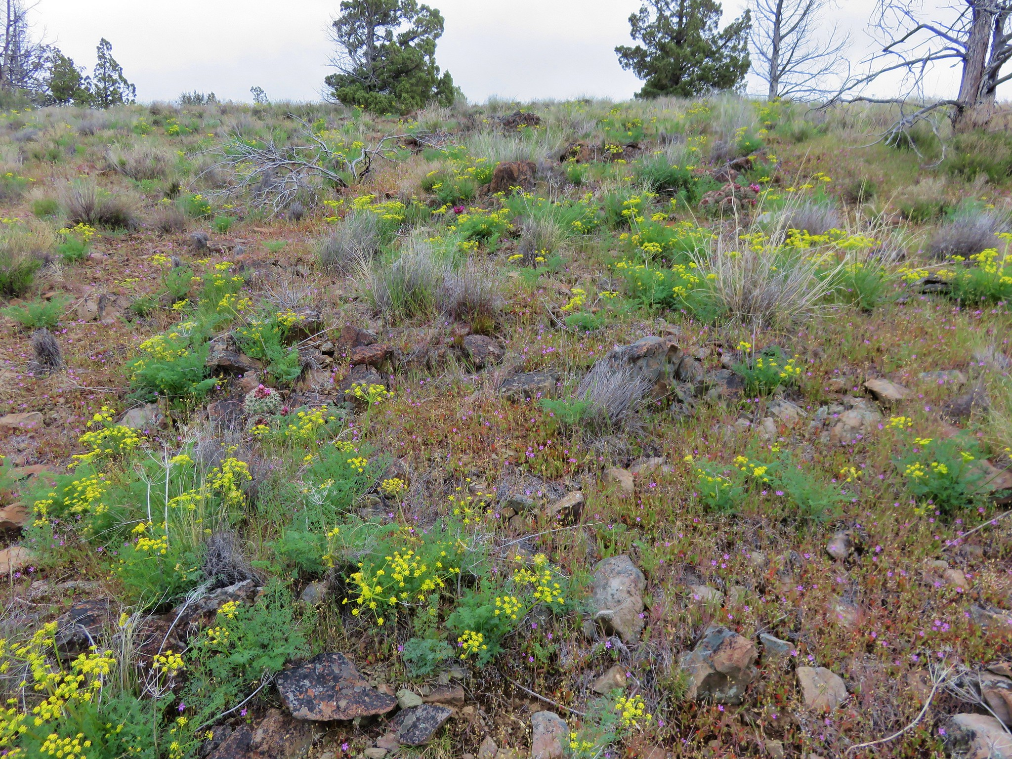 Wildflowers in the Spring Basin Wilderness