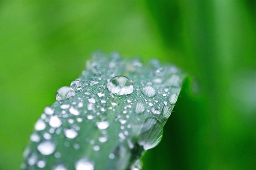 Droplets In Green | by hin_man