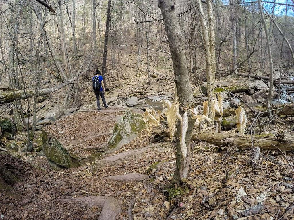 Kaaterskill Falls hike 8