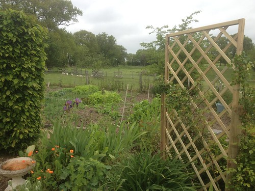 Zoe's potager viewed from the garden