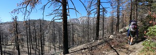 0407 Lake Fire burn zone on the PCT near mile 242 | by _JFR_