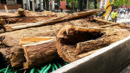 Spruce Street Wooden Water Mains Uncovered