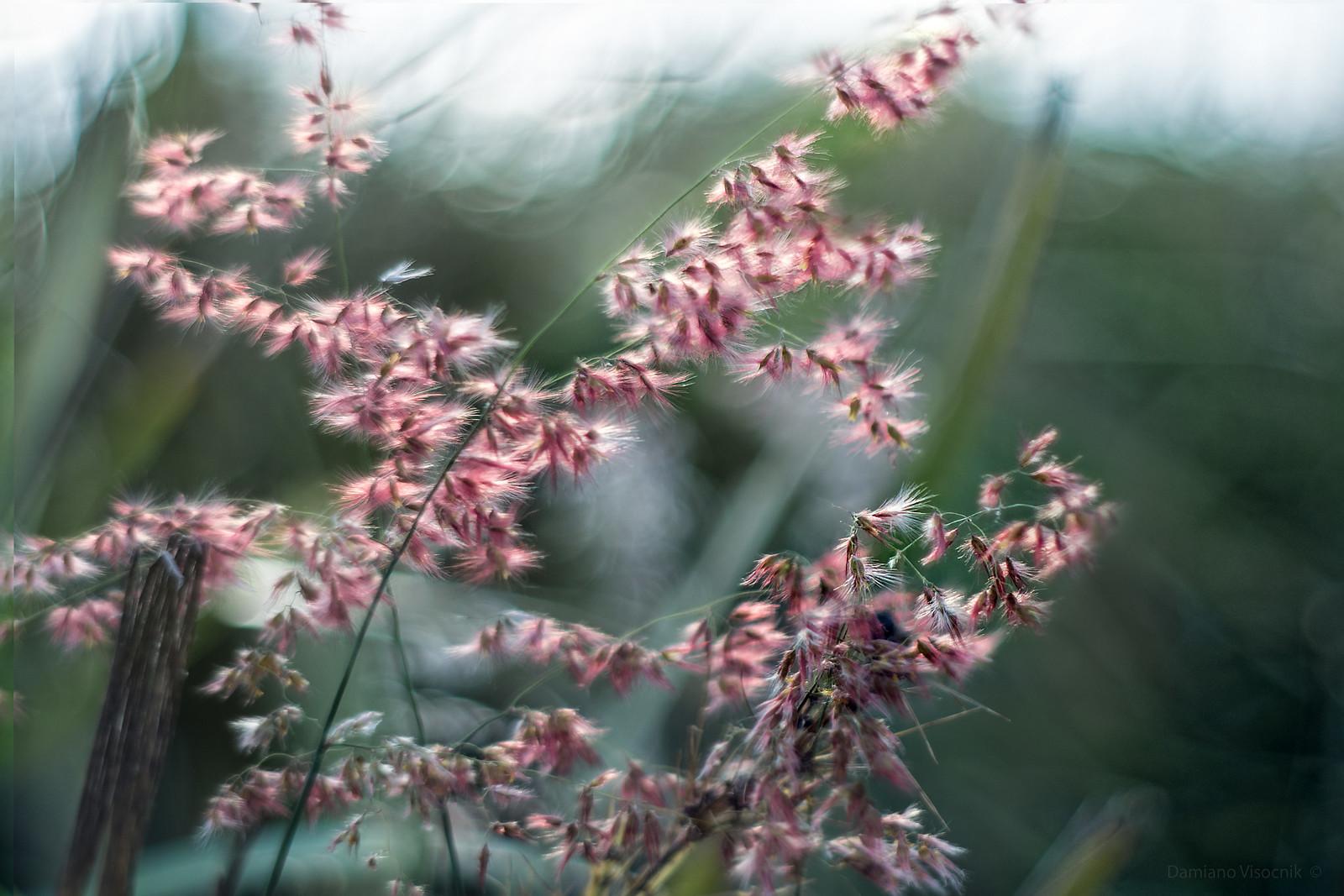 grass softness
