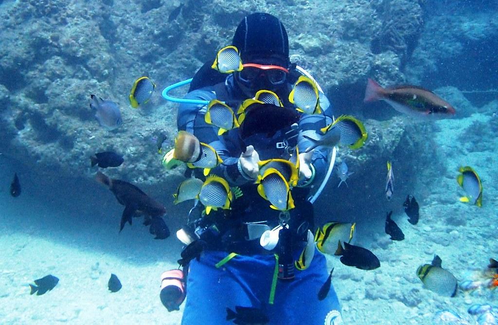 首圖:用相機代替板機,用記憶代替準星。再生速度緩慢的礁岩魚種,經不起無法管理的高效率潛水漁獵,水下只剩沒食用價值的小型魚能逃過一劫。
