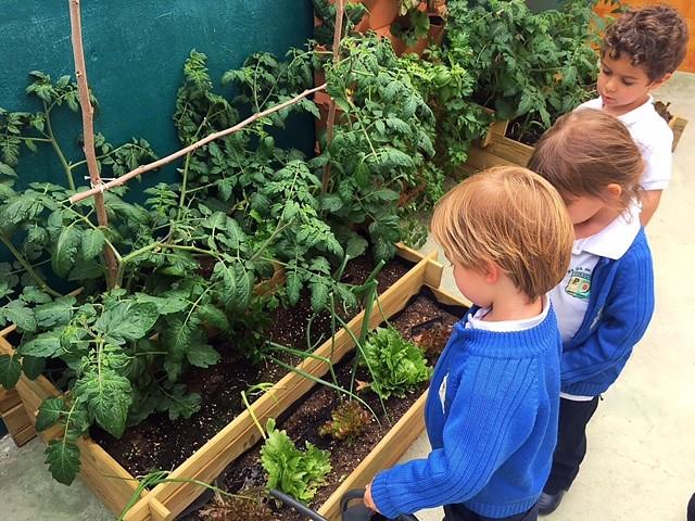 Huerto Ecológico Infantil