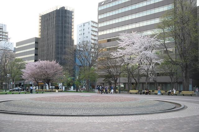20170503札幌市中央区付近の桜_13
