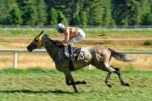 Horse. #horse #luisjardi #freesounds #freemp3 #cubase #seq ... - photo#23