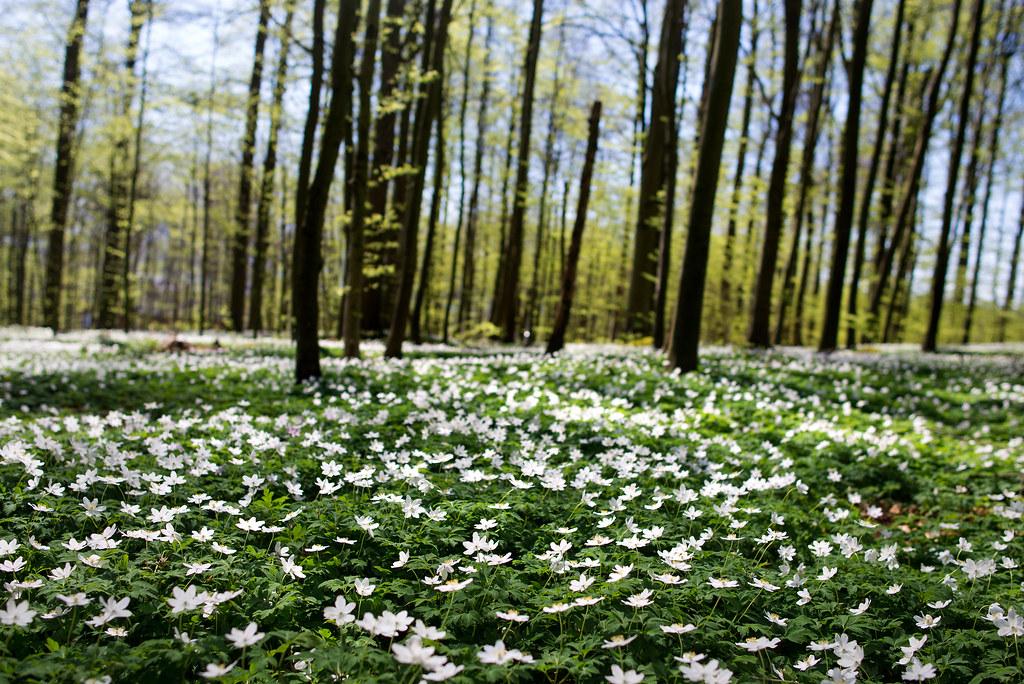 Bøkeskogen mat og natur 03